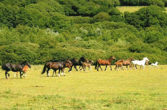 A selection of Tresorya Mares and Foals