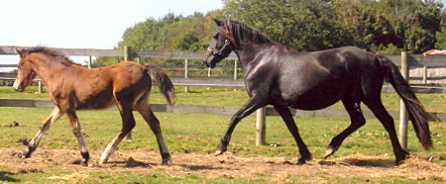 Tresorya Dafina Lwcus with Tresorya Derwena Lwcus